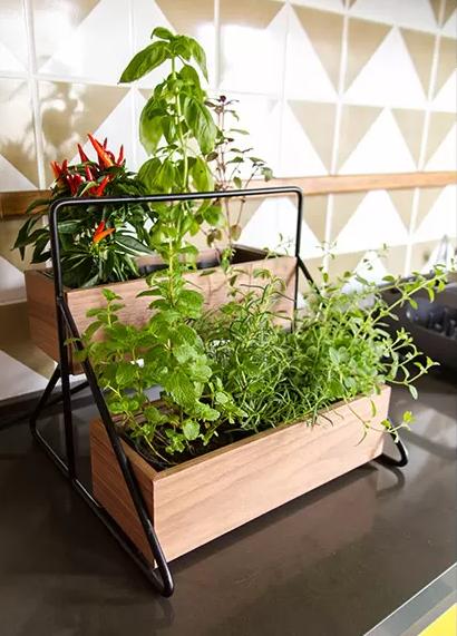 Horta em casa 10 - Horta em casa –boas ideias com toque especial na decoração