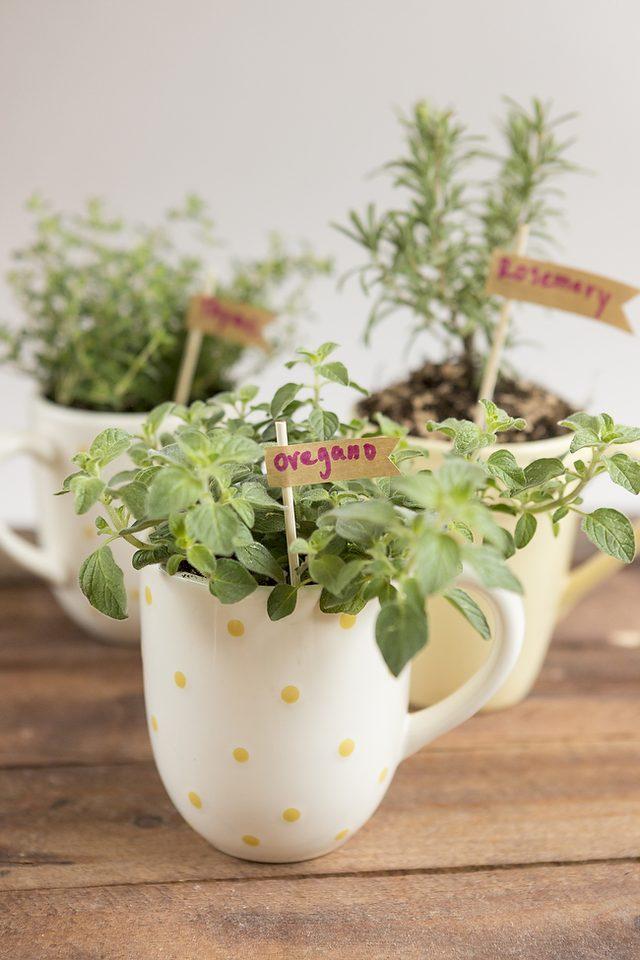 Horta em casa 2 - Horta em casa –boas ideias com toque especial na decoração