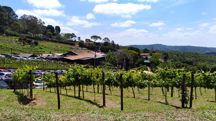 Quinta do Olivardo - Quinta do Olivardo
