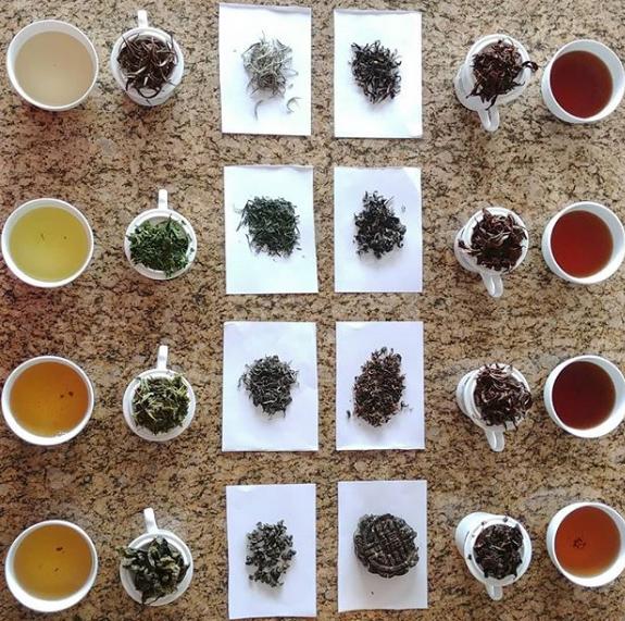Conversas com Chá Carla Saueressig7 - Conversas com Chá