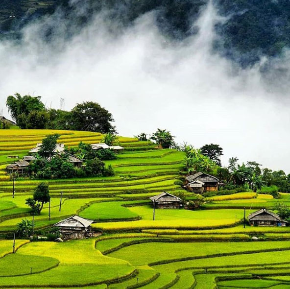 Vietnam campos de arroz em Ha Giang - Cochinchine